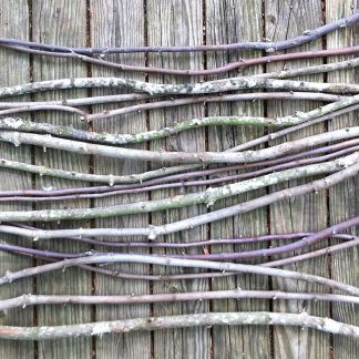 ActionCraftworks.com Branches24-02crop
